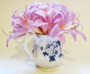 Matthew's Lilies