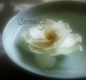 Floating Gardenia, E114, Crop; Watermark II, Serenity Caption