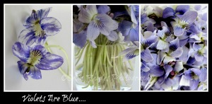 Violets Are Blue, Border, Caption, Watermark    PicMonkey Collage