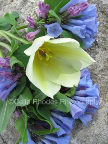 White Tulip with English Bluebells