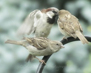 3 Birds, Watermark       Flowers, Birds, Critters at Dena's July 2 2014 109