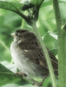 Green Shelter, Watermark       Flowers, Birds, Critters at Dena's July 2 2014 120