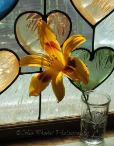 Lily Against Stained Glass Panel, E&C, Watermark       July 1 Blooms  2014 075
