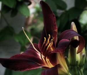 Petals & Pollen II, E41, Crop          Birds & Lilies Album III July 15 2014 093