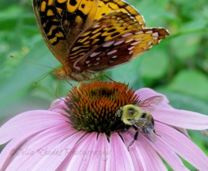 Table For Two, Watermark         Album 4, Bees and Butterflies July 10 2014 045