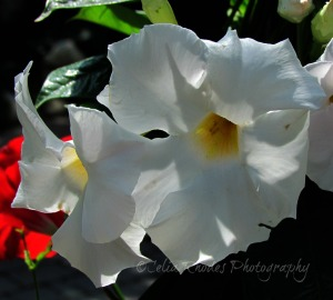 Backlit Beauties, Crop, Watermark       Vacation Photos I July 2014 375