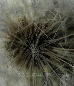 Enchantment, Watermark       Best Shot, Off-center Crop   Dandelion III + Pregnant Booth   4-30-2012 003