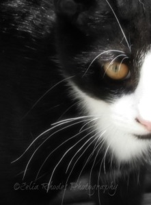 Whiskers,Watermark       AKitten in Sunlight, FB&W28+Soft50, Ex-12Hi5     ugust Cat Pix 8-24-2013 016