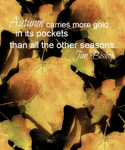 Autumn Quote, Watermark       Autumn Leaves 011 (5), S-22, Seamless
