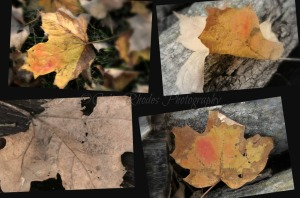 Fallen, Watermark      Ribbet collage