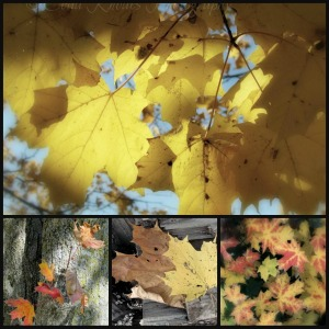 Ribbet collage, Maple Leaves