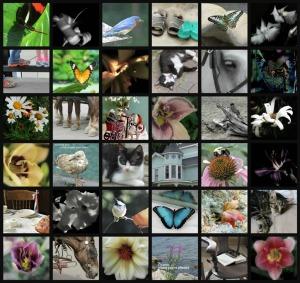 Ribbet collage, My Photos