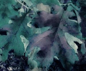 Watercolor Leaves, Watermark       Pieces of October    10-12-2014 020