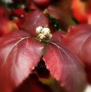Next Year's Blooms II, FS+Ex-32, Watermark       Squirrel, Leaves  NOV 4-2014 019