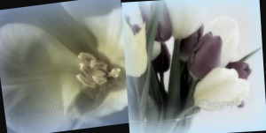 Tulips in Winter       Ribbet collage