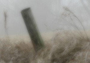 Fencepost and Grass Heads, Version II, Watermark         Crop, Ex&Sh Adj        AM Fog Walk   JAN 03 2015 134