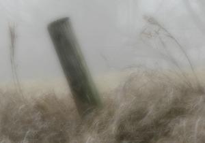 Fencepost and Grass Heads, Version II, Watermark         Crop, Ex&Sh Adj        AM Fog Walk   JAN 03 2015 134