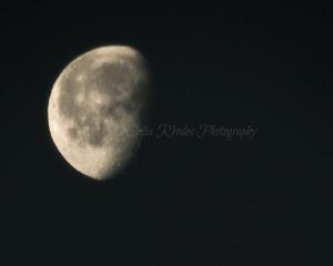 Moon in the Morning Sky, Watermark     Crows, Deer   JAM 10 2015 005