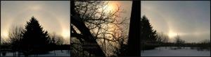 Sun Dog Trio, TempAdj         Ribbet collage