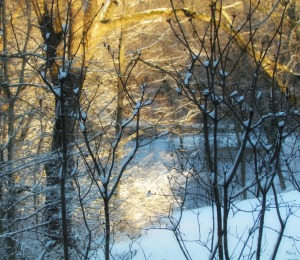 Woods I, Crop, Orton, Watermark       Birds, Snow II   JAN 25 2015 030