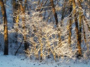 Woods V, Watermark       Birds, Snow II   JAN 25 2015 031