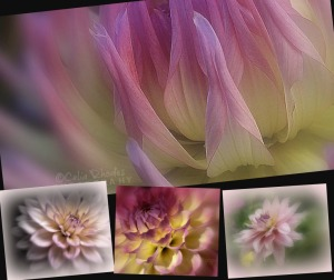 All Dahlias, 4 Images, K14                               Ribbet collage