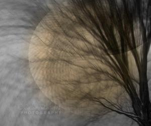 Ghost Moon, New Watermark               Trees Against Sky, Prev Edits+Vortex             Ex10Sh51         AM Fog Walk   JAN 03 2015 037