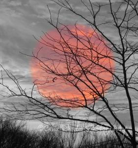 Lacy Branches, Crop III, Version III, Watermark           Squirrel + Sunset   FEB 7 2015 014