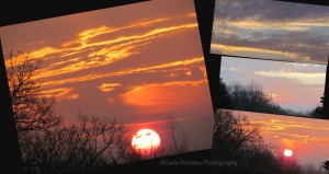 Sunrise Collage        Ribbet collage