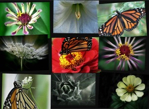 9 Images, Garden Montage       Ribbet collage
