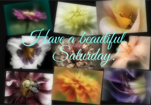 9 Images, Beautiful Saturday        Ribbet collage