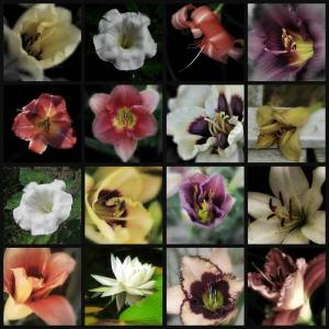 16 Images, Consider The Lilies
